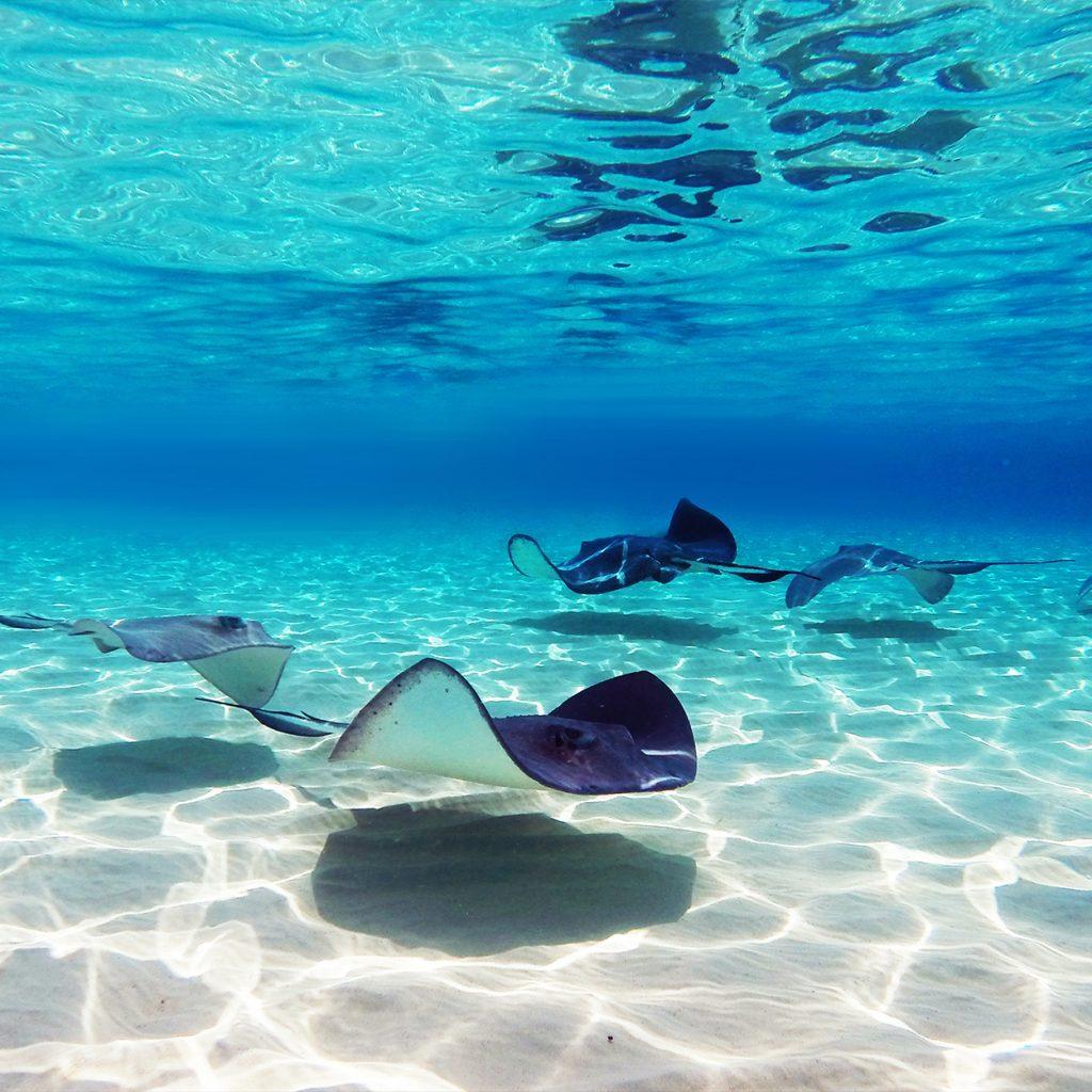 Penha Grand Cayman